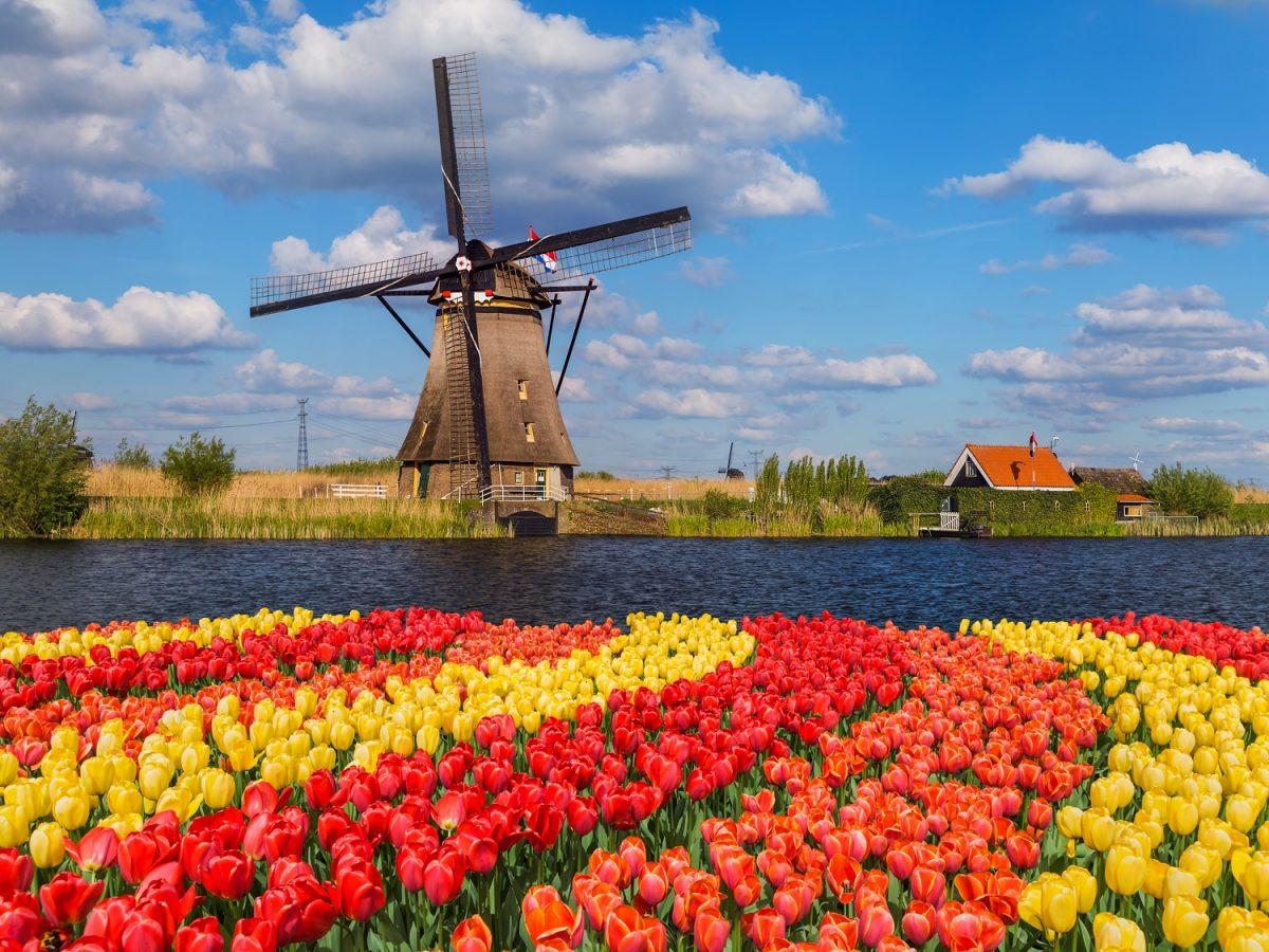 Amsterdam tulip fields bike ride