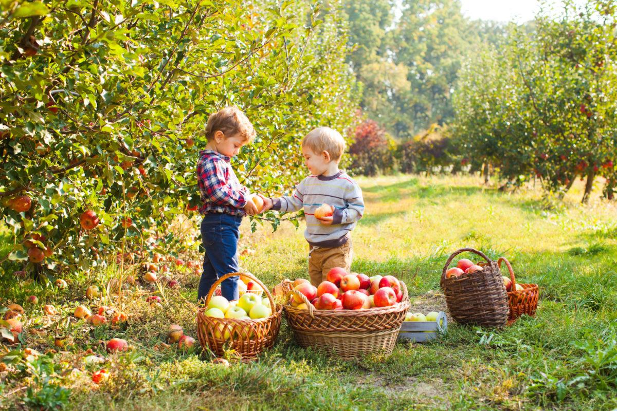apple picking farms near New York City