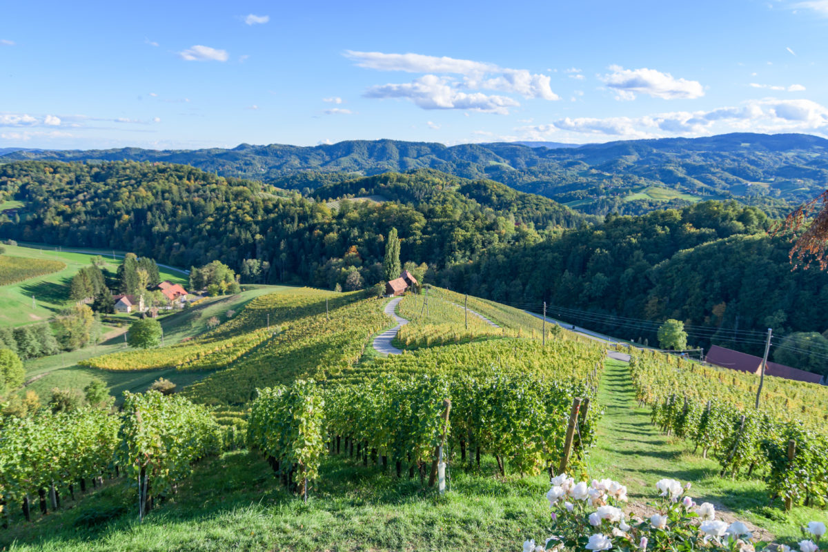 Wine region in Slovenia