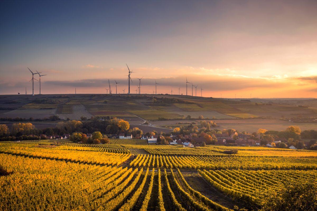 Wine Regions of Germany